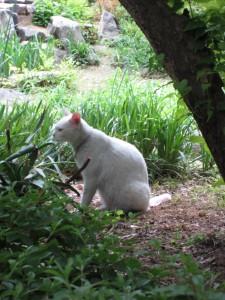 En katt med rosa svans! Någon har färgat den.